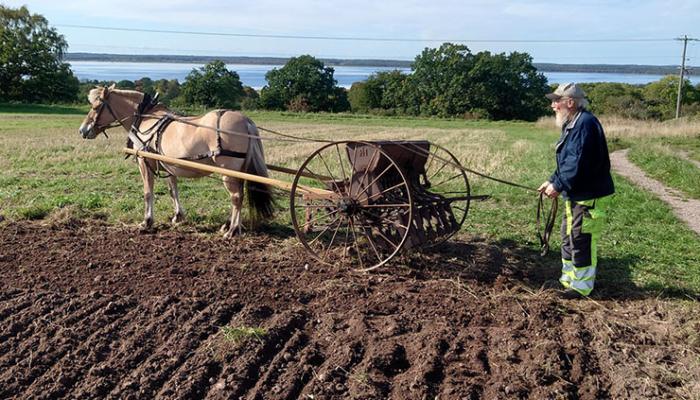 Med hästkrafter och gamla maskiner plöjdes åkern.