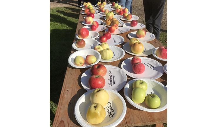 Många sorters äpplen visades i Fornbyn.