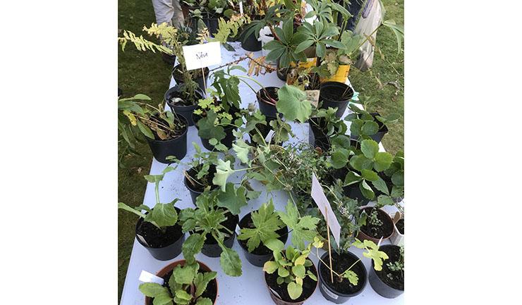 Plantor inför nästa säsong såldes i Fornbyn.